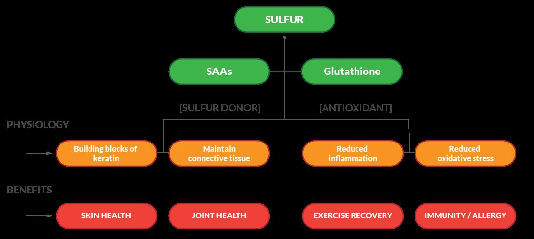 Sulfur Diagram